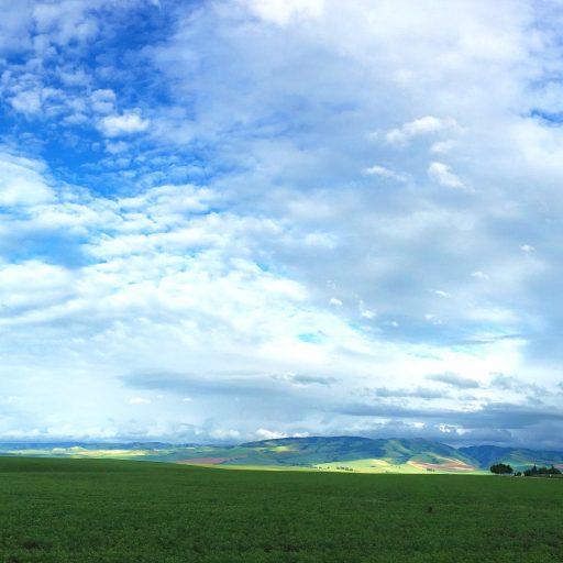 cropped-agriculture-blue-blue-sky-461831.jpg